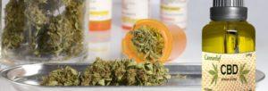 Le cannabis CBD